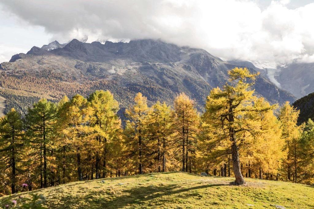 Herbstimpression auf der Moosalp, Anfang/Mitte Oktober