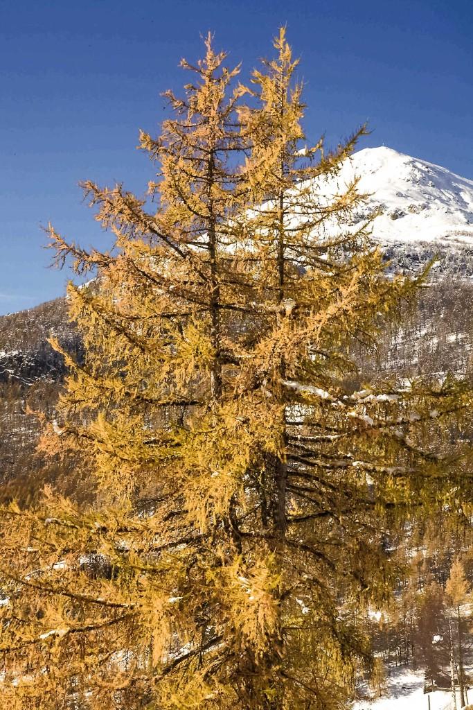Herbst, im Hintergrund Vorgipfel vom Augstbordhorn, Ende Oktober