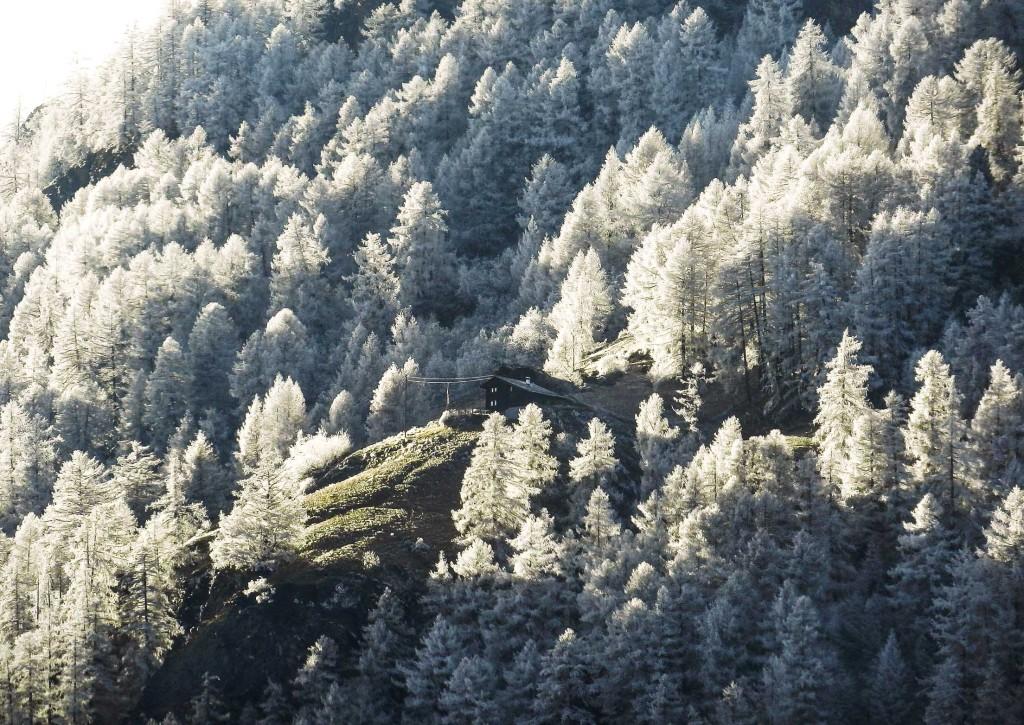 Rauhreif, oberhalb Törbel, Anfang Dezember