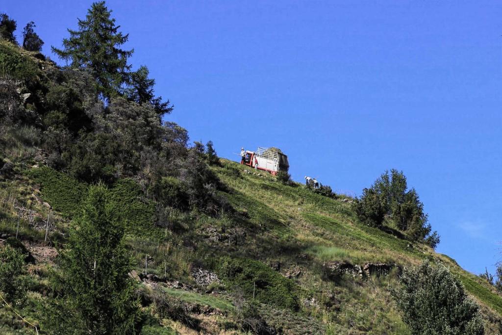 Heuernte hoch am Hang, Umgebung Chalet, Anfang Juli